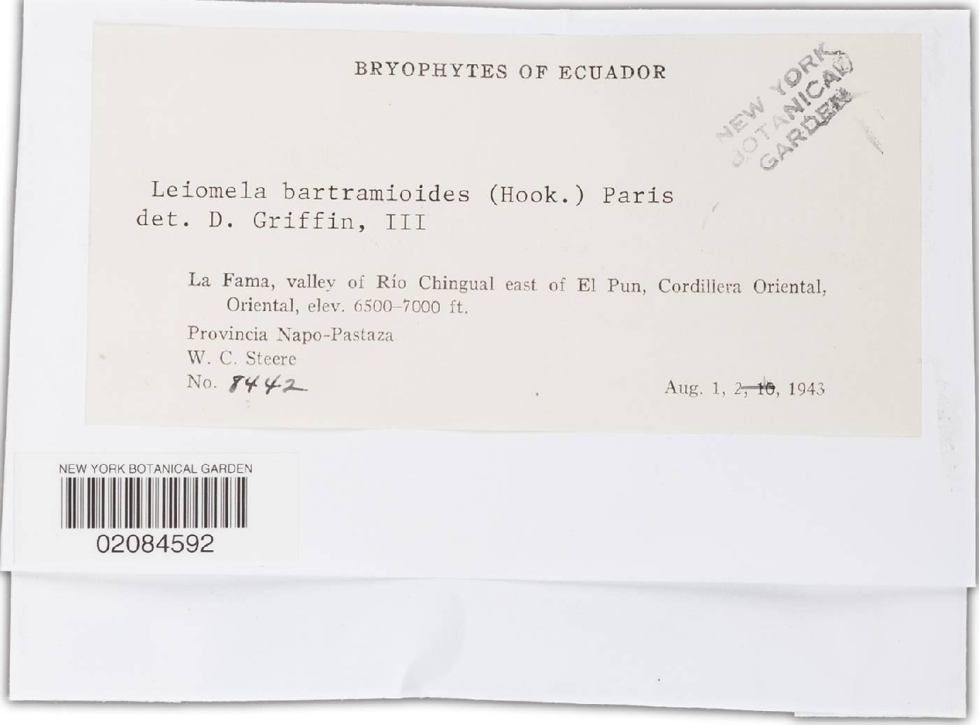 Leiomela bartramioides image